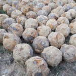 359 Ottoman Turkish Cannonballs from Danube River Bastion Found by Accident in Bulgaria's Ruse
