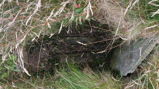 One of the possible cists close to the Tresness site