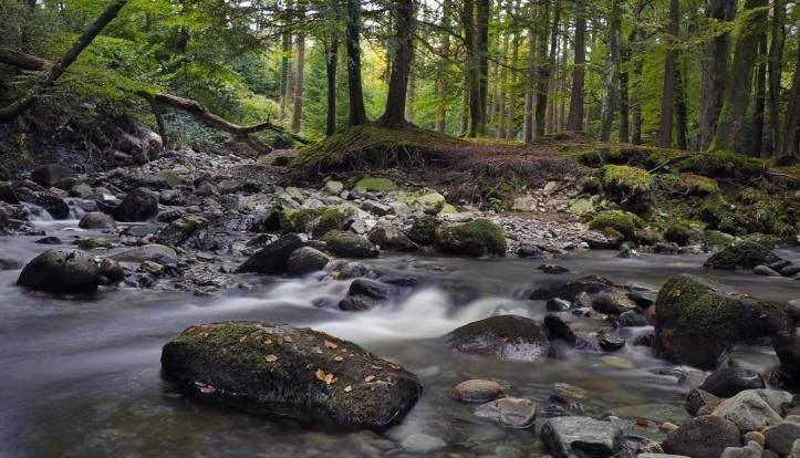 autumn_in_tollymore_forest_n_ireland_by_atenytom_de7e3b1-fullview