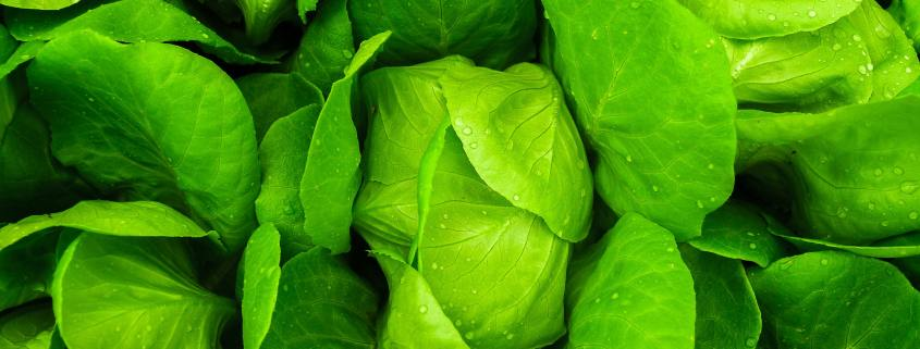 Spinach and other leafy green vegetables are great sources of folate