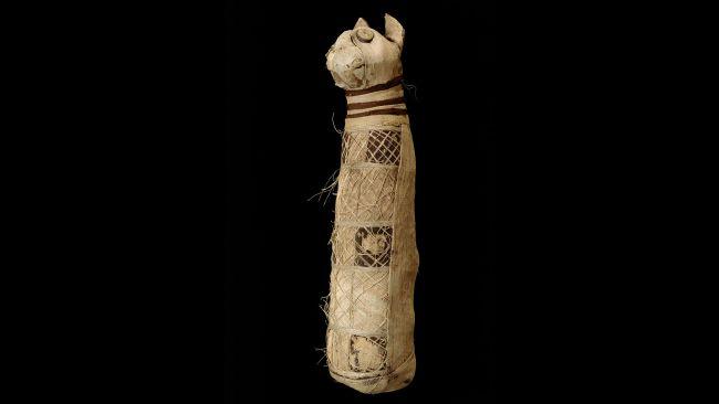 Momie de chat, musée de Rennes