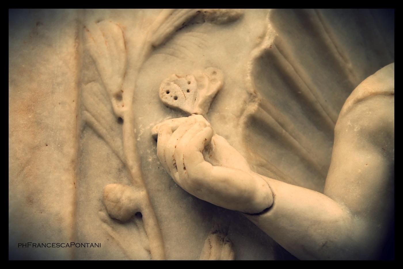 UNA FARFALLA NEL MUSEO DELLE TERME DI DIOCLEZIANO a ROMA