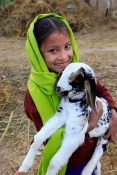 A gift of a goat from Heifer International