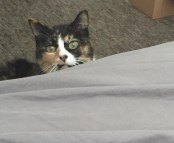 Megan Biere's cat, Kitty