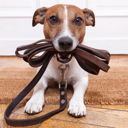 Raleigh Design Firm Sample Pet small Business