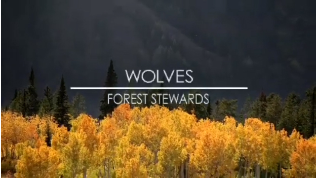 Wolves Forest Stewards