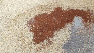 2016 ArcheWild - Eragrostis spectabilis seed cleaning