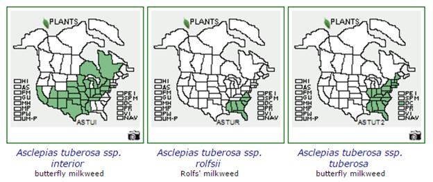 Plant Labeling Asclepias tuberosa
