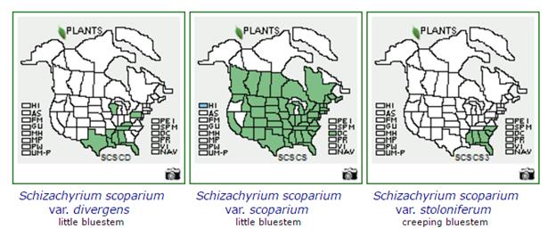 Plant Labeling Schizachyrium