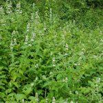 native plant species availability