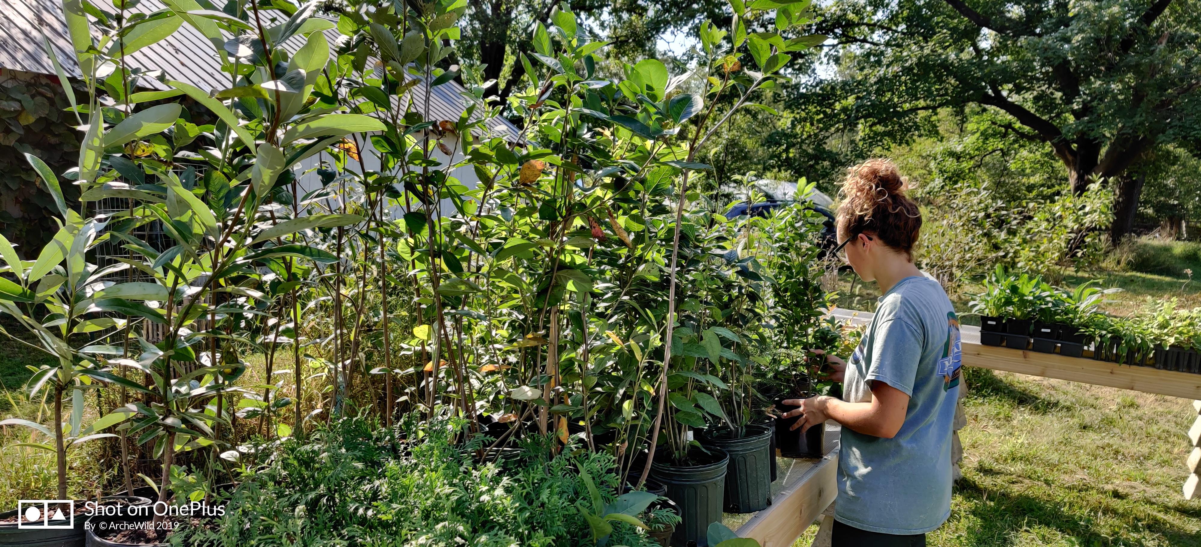 Native Plant Retail Sale