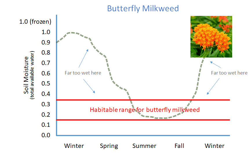 Butterfly Milkweed cannot survive in a typical rain garden