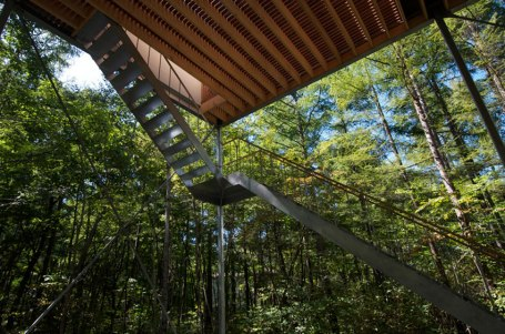 Pilotis in a Forest House / Go Hasegawa
