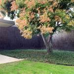 Garden tree - Norton Simon Museum in Pasadena / Ladd & Kelsey Architects