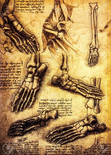 Studies of bones