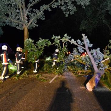 2015-08-13 Boom over de weg Wollinghuizerweg Vlagtwedde