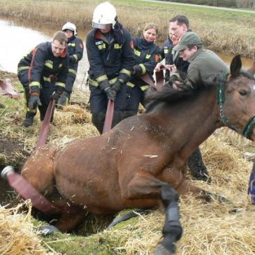 2012-03-10 Paard in gat Onstwedde
