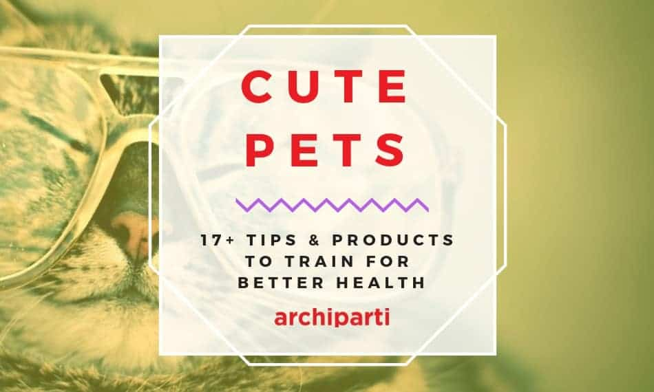(Dogs, Cats & Other Cute pets) Tips & Products to train for better health