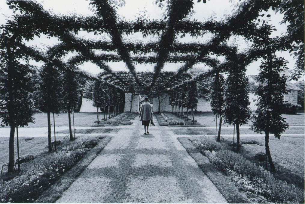 a woman walks in the middle of a vinecovered pathway with flowers on either side