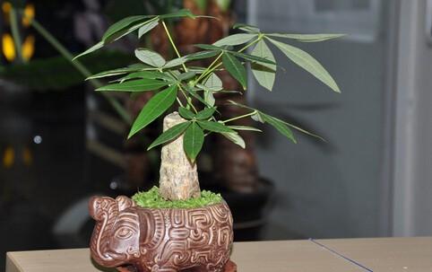 【植物五行風水學2020】為家居帶來好運的16種植物?