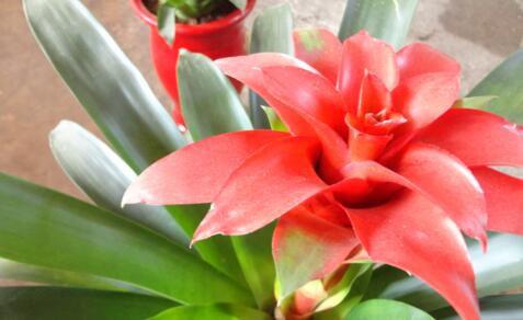 2021如何發財?分享7種旺財的店鋪風水植物