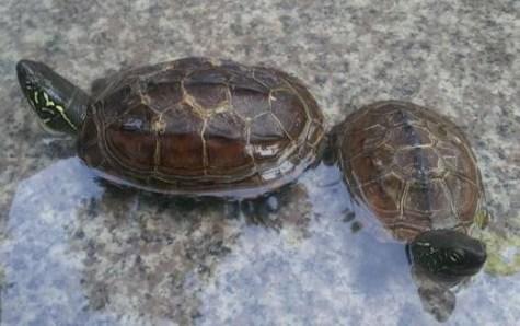 新手養龜:4大想要家居吉祥的風水須知(2021)