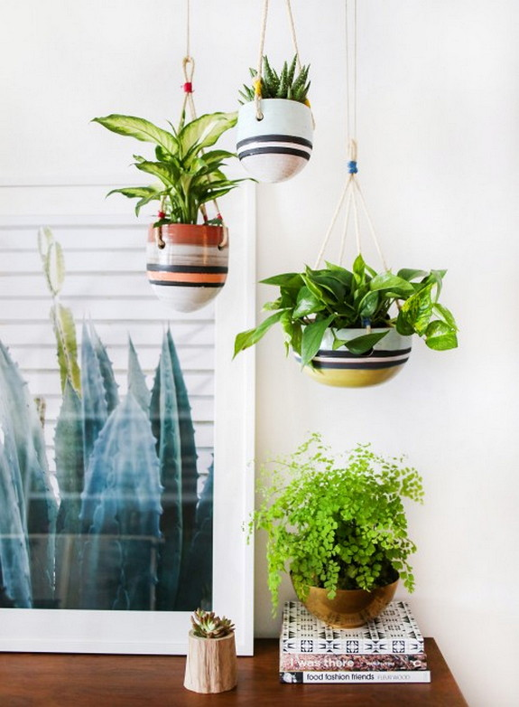 An Indoor Hanging Garden