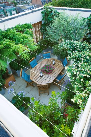 Choosing Plant Types for Make a Beautiful and Attractive Rooftop Garden