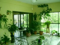 Ornamental Plants for Changing Terrace into Closed Living Room