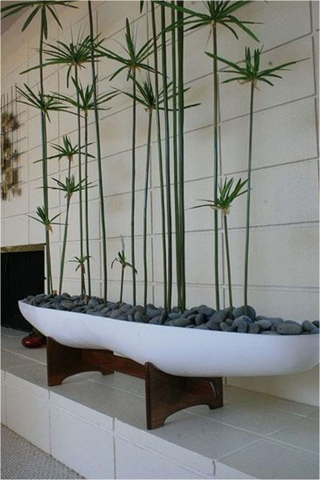 New Style Of Tree And Rock Ideas