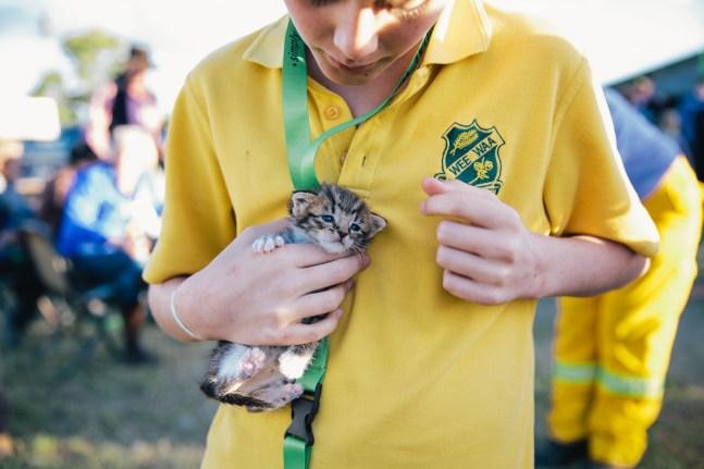 Max the Kitten