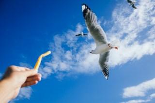 Feeding the birds back at MOFO