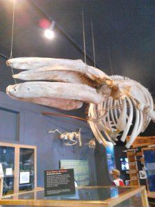 whale exhibit San Juan Island WA