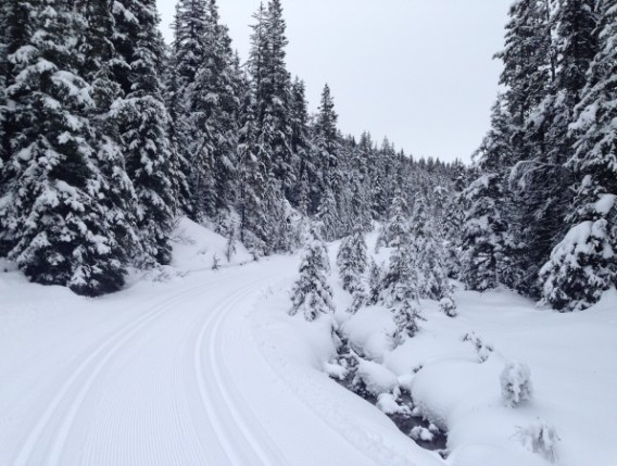 This trail was groomed and tracked for skiing, and is a designated ski trail