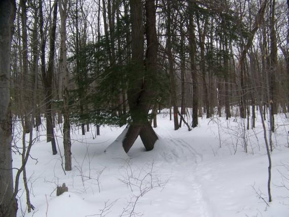 Mendon Ponds, Rochester, NY