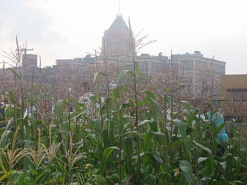 urban farming- detroit