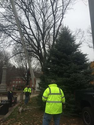 Workers from Bellemare Tree Service of Naugatuck and the Naugatuck Parks and Recreation Department put up a Christmas tree on the town Green in Naugatuck on Tuesday. Contributed photo