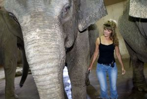 Darlene Commerford guides one of her family's three elephants with a billhook in 2007. Republican-American archive