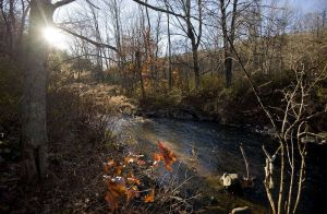 The late afternoon sun shines through trees and onto the Bantam River near West Morris Road in Litchfield. The river has seen heavy flows of sewage this year with little public notice.  Jim Shannon Republican-American