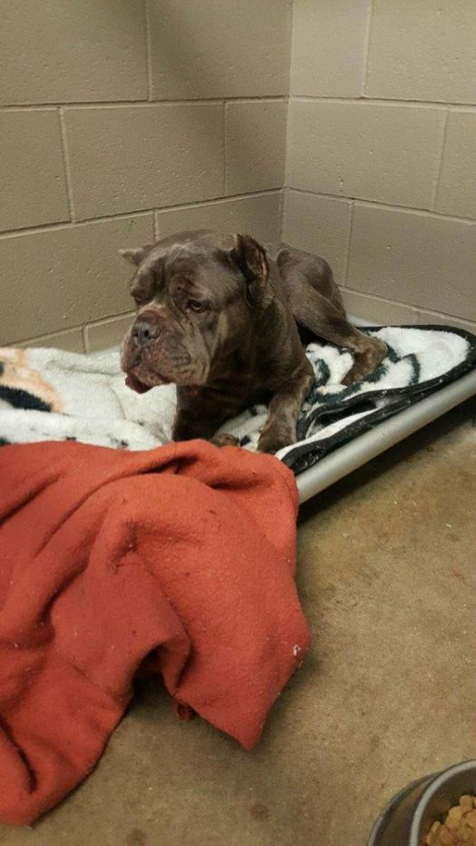 WOLCOTT, CT - March 8, 2018 - 030718ALHO03 - A dog that was rescued from a storm drain in Wolcott Thursday has been named