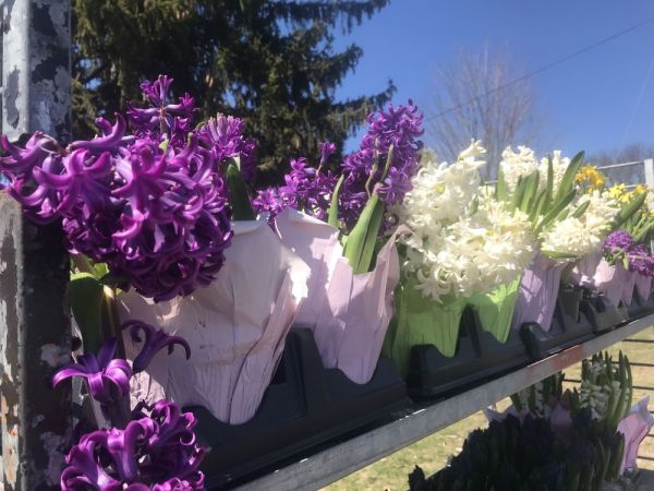 CHESHIRE -- The Cornerstone Church in Cheshire sponsored an Easter Flower Sale to raise money to keep the Center for Human Development's Hospitality Center in Waterbury open to the homeless on weekends during the winter months. Ajhani Ayres/ Republican-American.