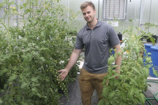 Nonnewaug High School Sustainable Food Production agriscience teacher Tyler Cremeans shows off some of the tomatoes that are being grown for the upcoming Farm to Table Dinner at Toplands Farms on Painter Hill Road in Roxbury.