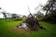 A tree is uprooted in the aftermath of Hurricane Laura Thursday, Aug. 27, 2020, in Sabine Pass, Texas. (AP Photo/Eric Gay)