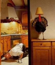 smart turkey