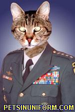 example_cat_4
