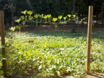 Apple Ridge Farms (5)