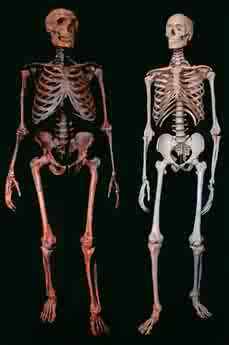 Neanderthal on left and Cro-magnon on right