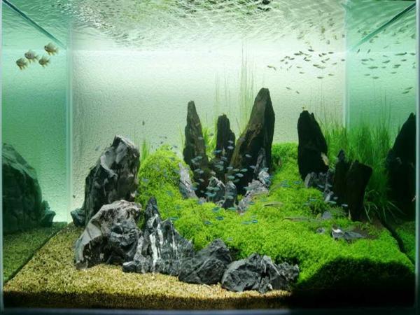Un Aquarium Design Pas Cher Quelques Ides En Photos