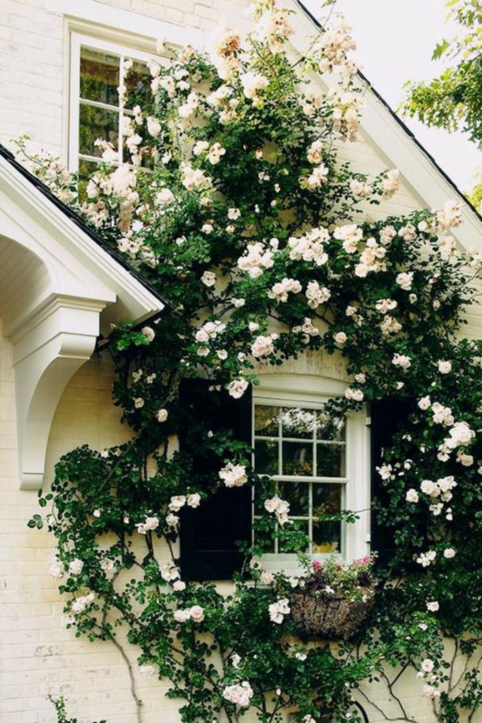 Les Plantes Grimpantes Beaucoup Dides Pour Le Jardin