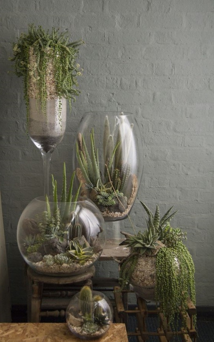 Cactus Sous Cloche Beautiful Plantes Vertes Lart Du